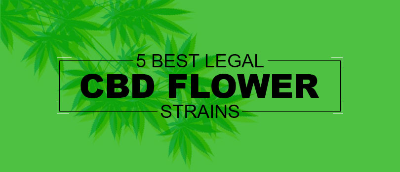 Best Legal CBD Flower