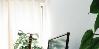 plants desk